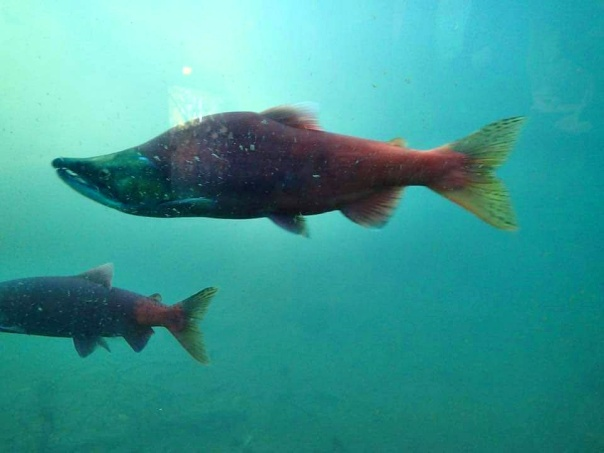 bean salmon (6).jpg