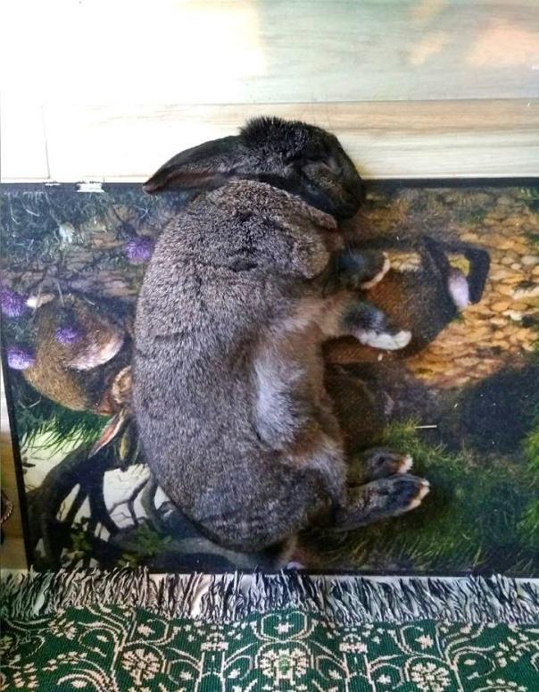 astrid sleeping