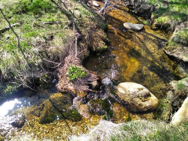 faery creek.jpg