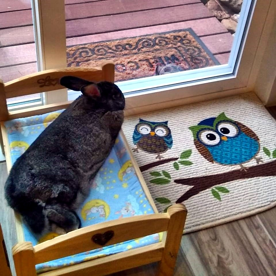 astrid and bunny.jpg