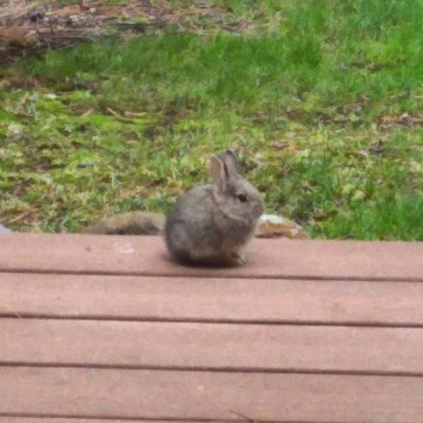 baby bunny lawn.jpg