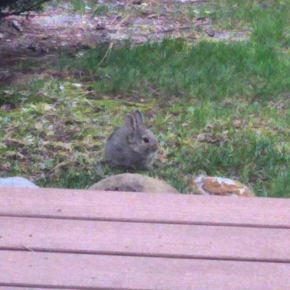 bunny lawn.jpg