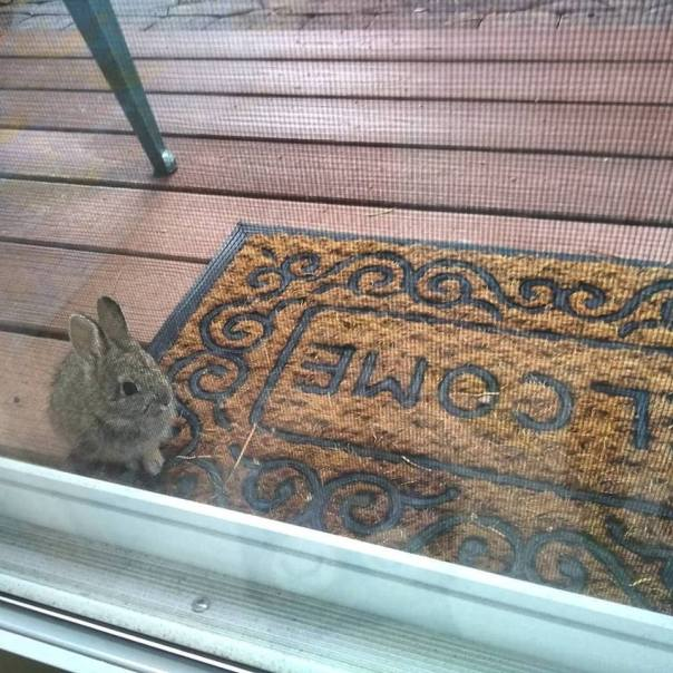 welcome bunny6.jpg