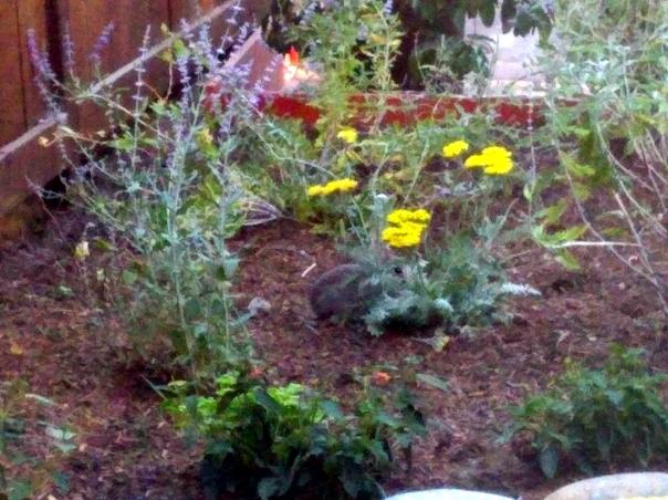 bunny garden.jpg