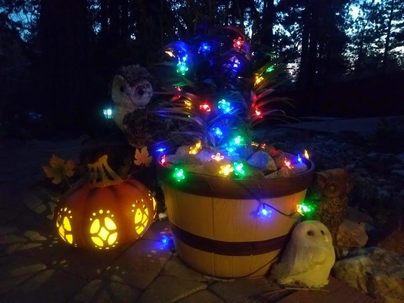 night pumpkin