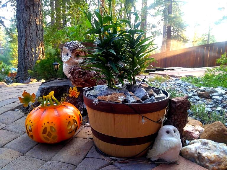 owls and pumpkin